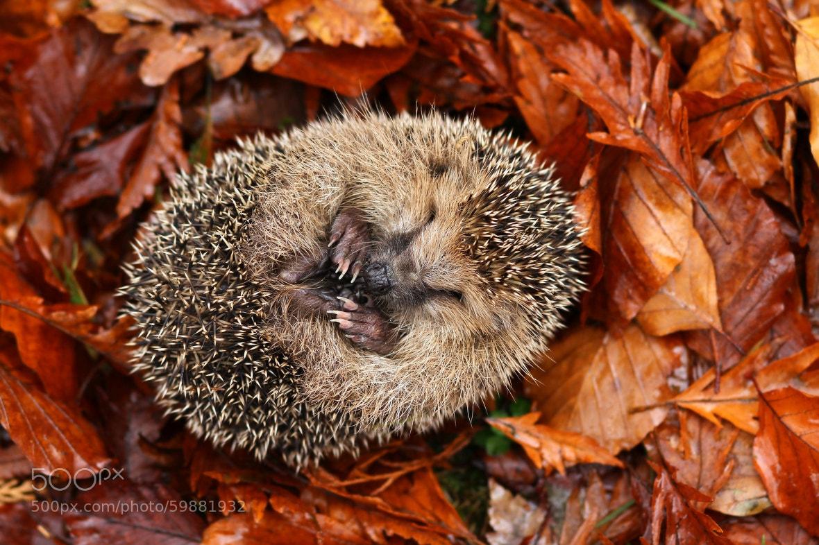 Photograph Sweet dreams by Miroslav Hlavko on 500px