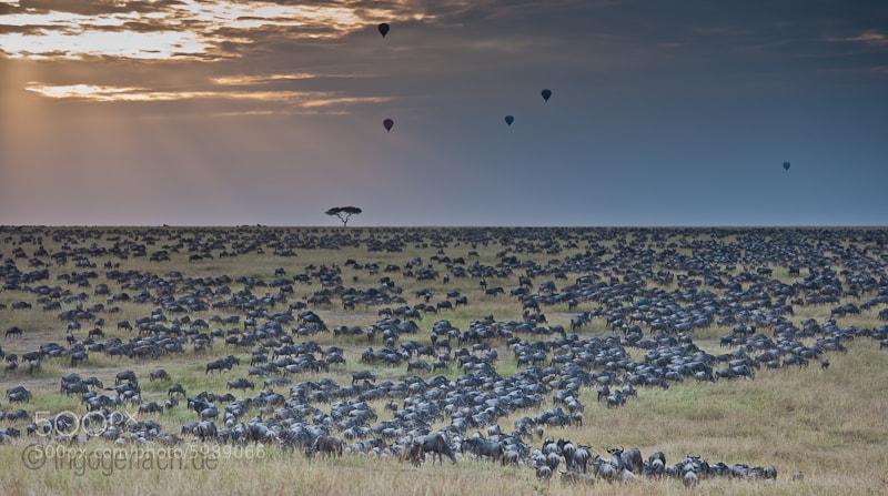 Photograph Hotairsafari by Ingo Gerlach on 500px