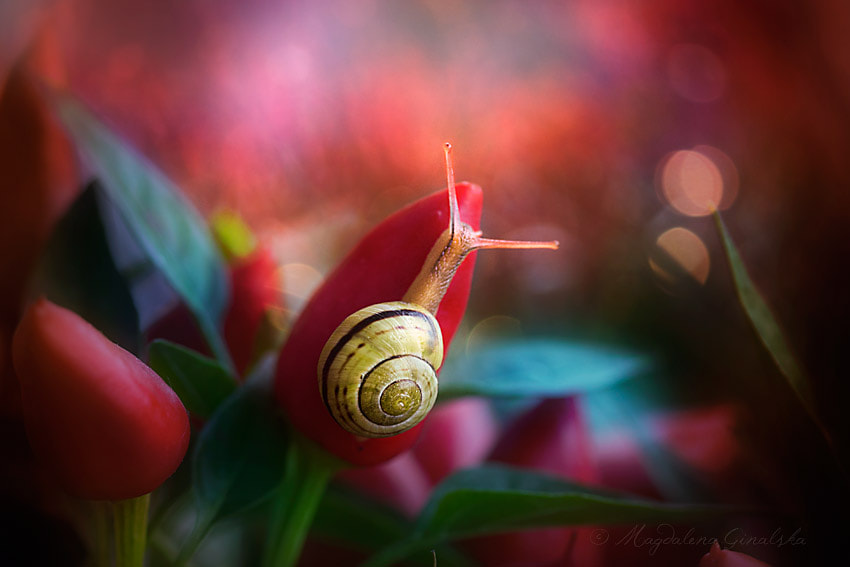 Photograph Untold by Magdalena Ginalska on 500px