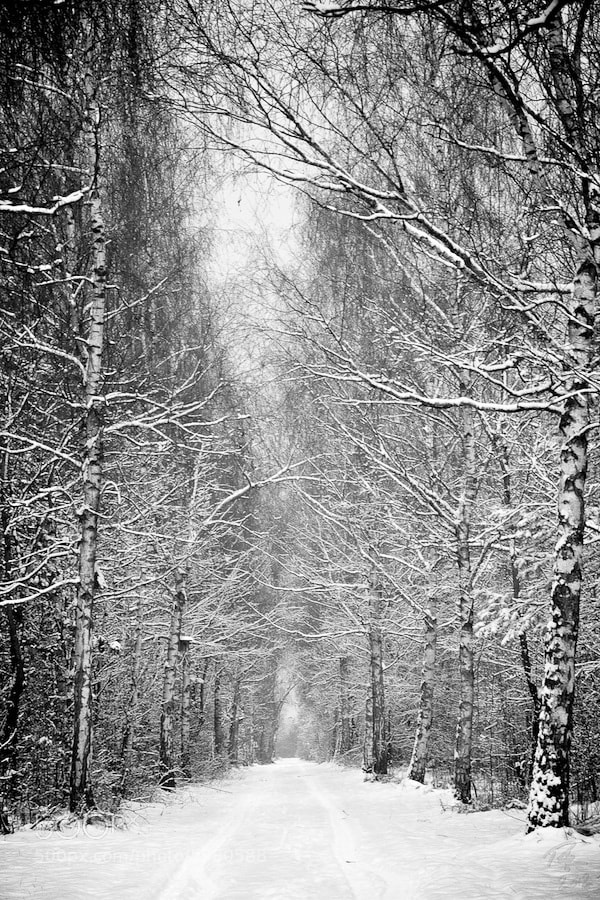 Photograph Winter reminiscence by Benno Pütz on 500px