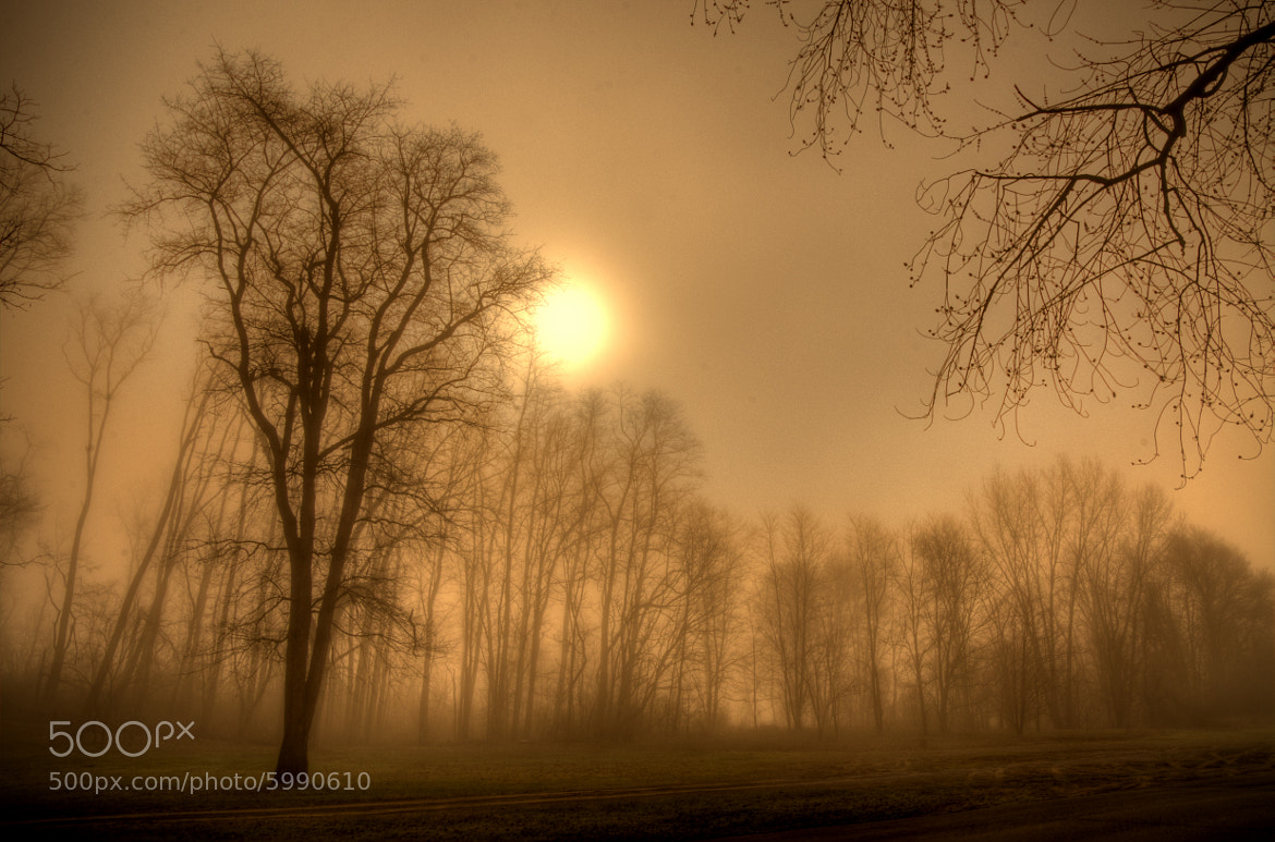 Photograph Fog by Brian Michaud on 500px