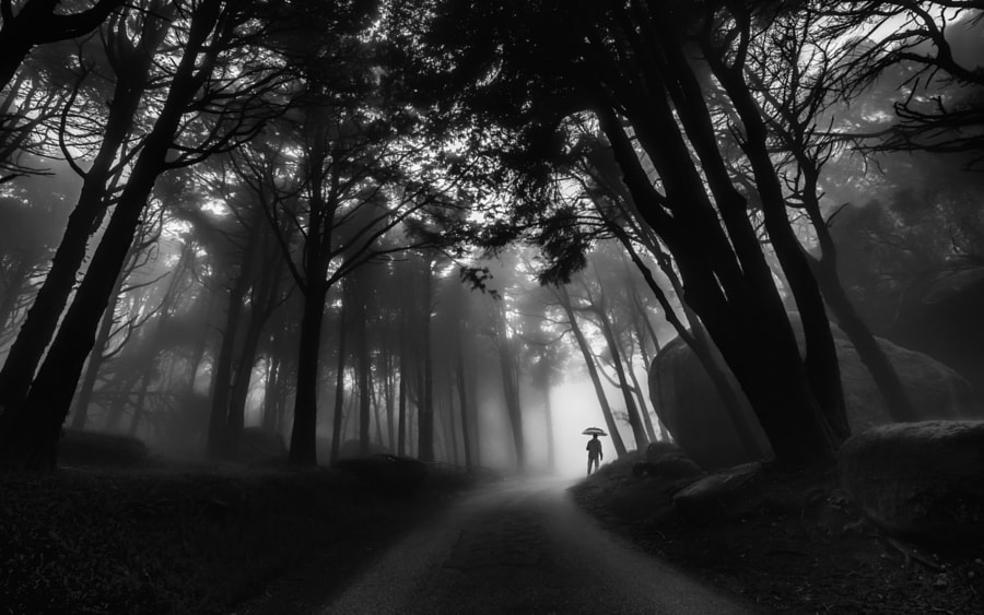 Through the mist by paulo mendonça on 500px
