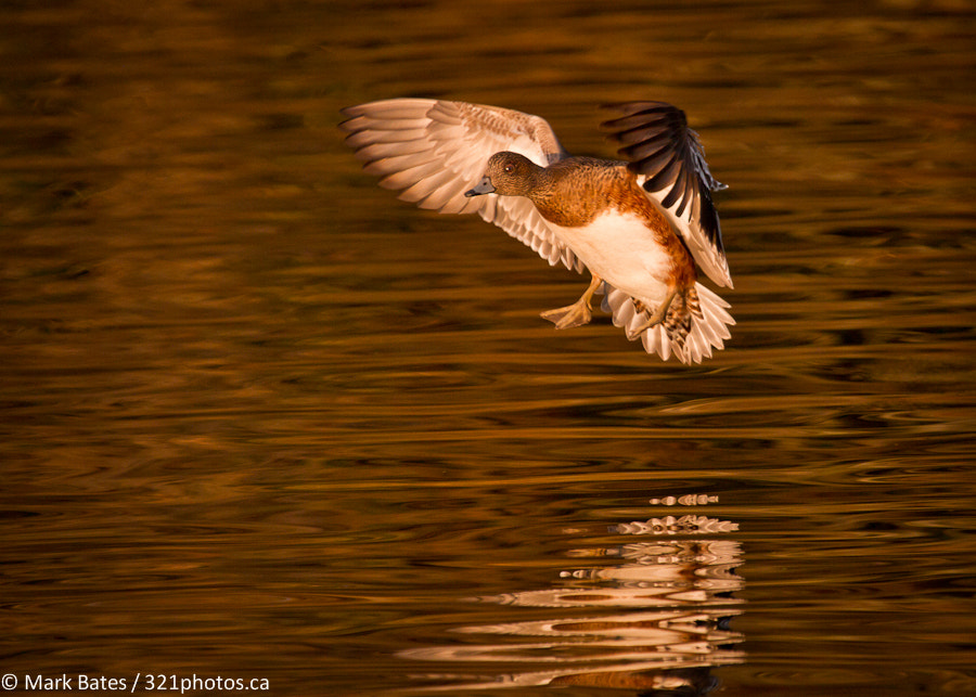 Photograph Sunset Landing by Mark Bates on 500px