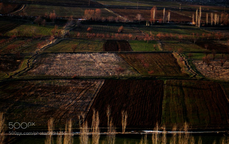 Photograph Ground tissue by Behzad saeidi on 500px