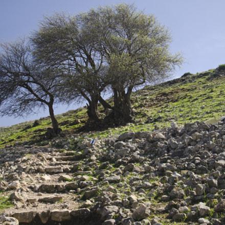 "[202] The Trail to Tel Yodfat ( 32°49'58.15""N 35°16'39.46""E)"