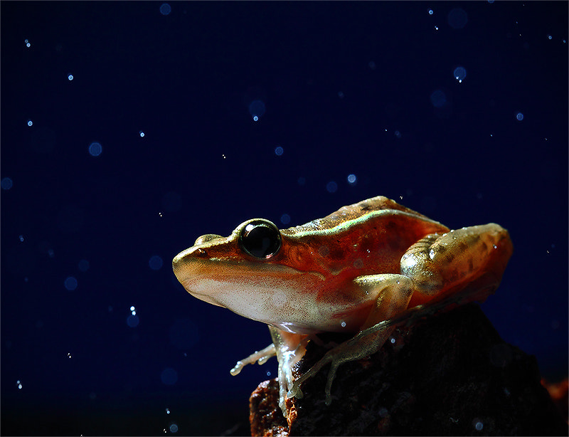 Photograph Frog by AUD03  on 500px
