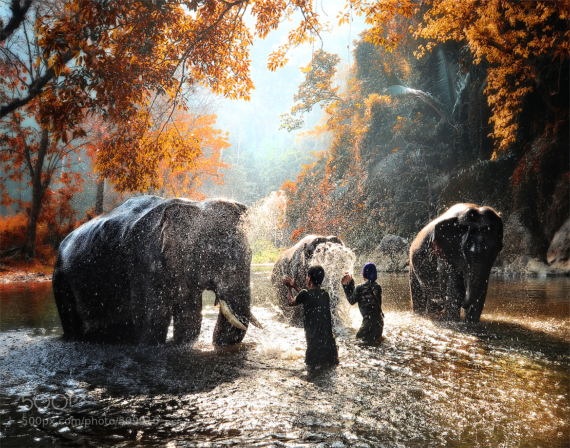 Photograph Elephant bathing by Auttapon Nunti on 500px