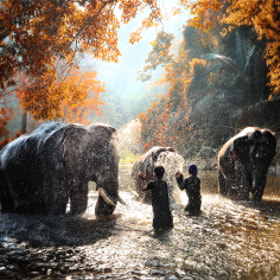 Elephant bathing by Auttapon Nunti on 500px.com
