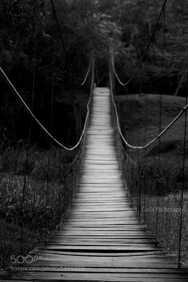 Photograph Bridge by Leda Etcheverry on 500px