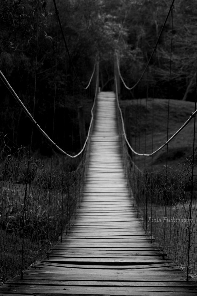 Photograph Bridge by Leda Etcheverry on 500px