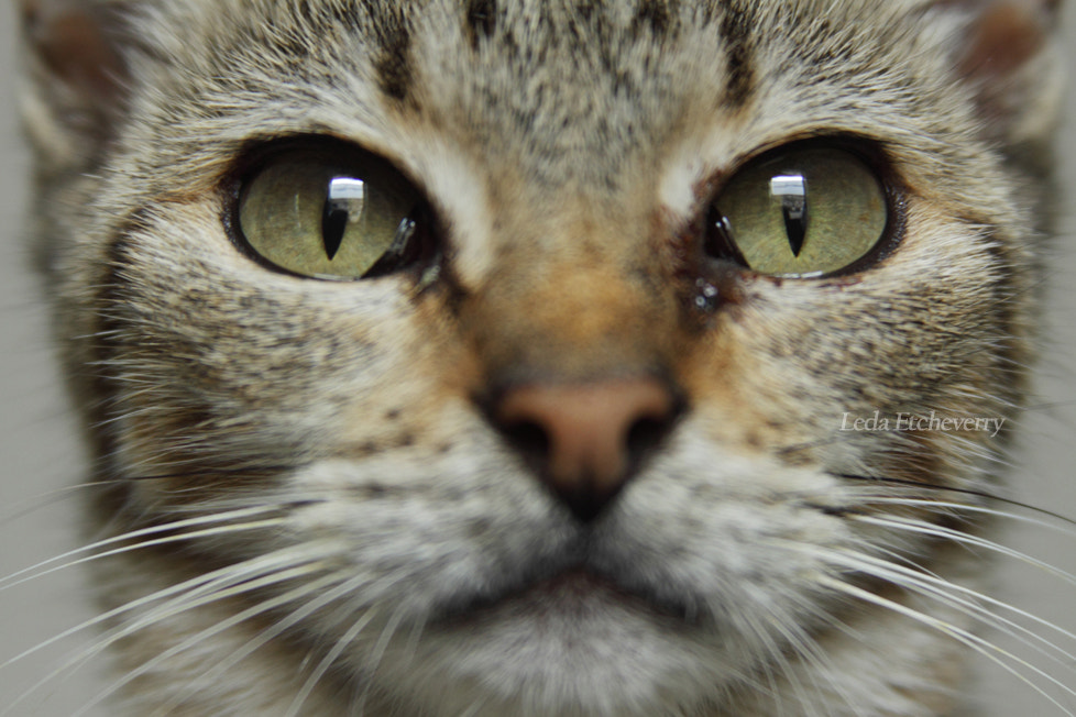 Photograph Eyes by Leda Etcheverry on 500px