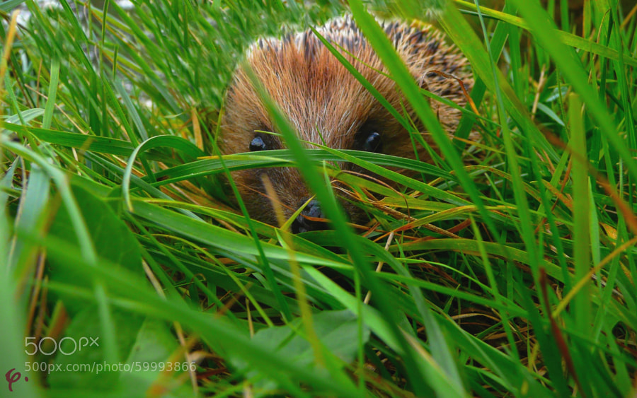 Don't care... you'll never see me!