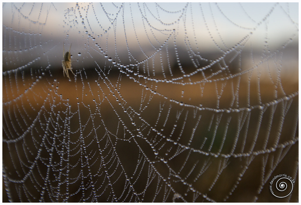 Photograph Web by Dave Morris on 500px