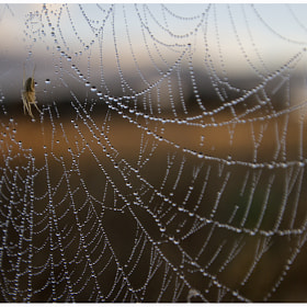 Web by Dave Morris (morrisphoto)) on 500px.com