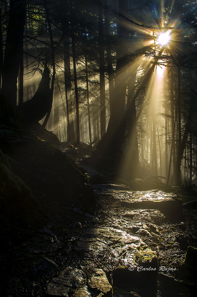 Photograph Light My Path by Carlos Rojas on 500px