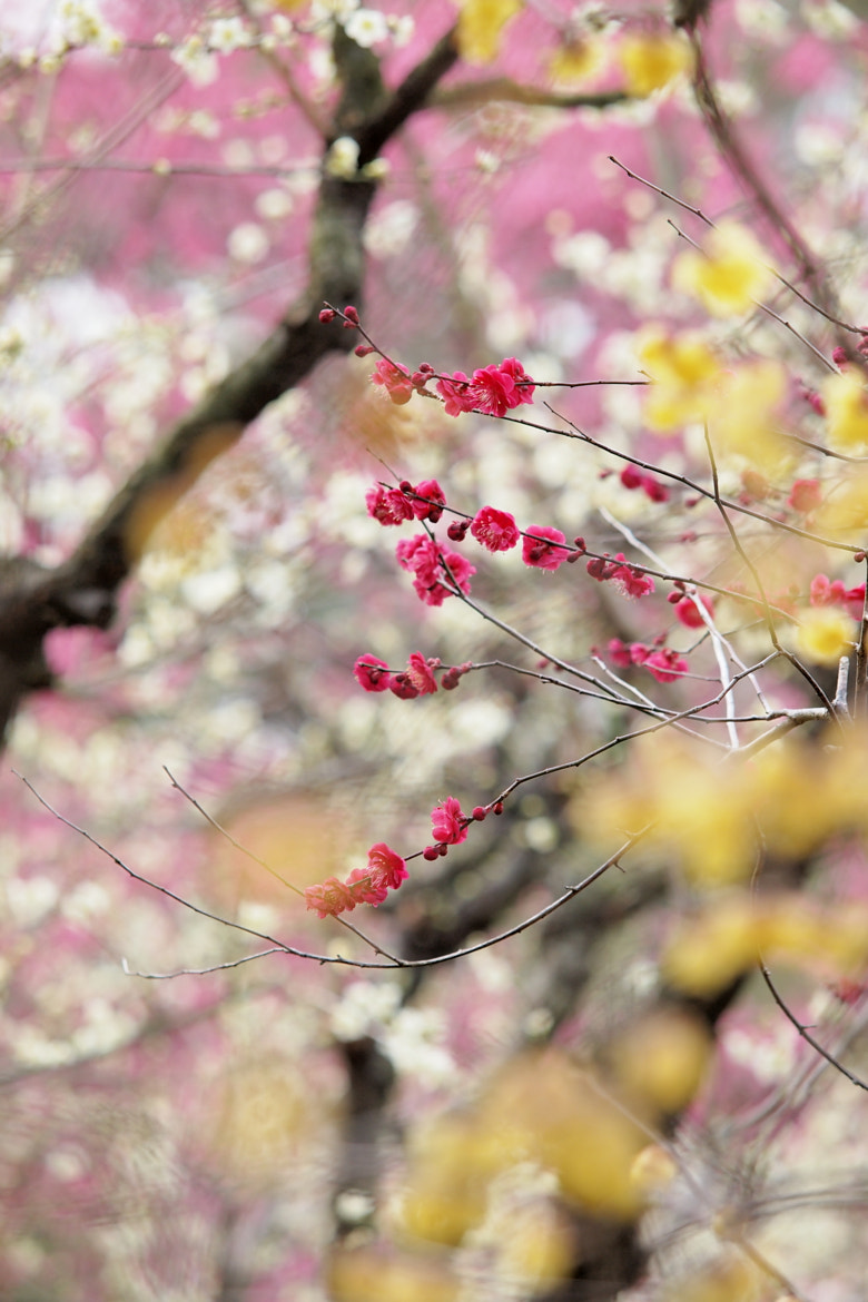 Photograph Spring color #3 by Kaz Watanabe on 500px