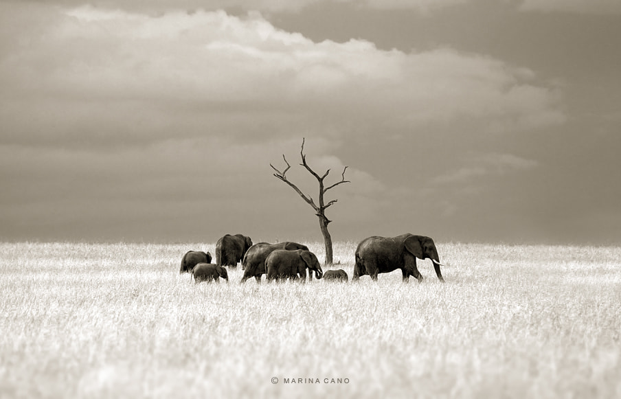 Photograph Masai Mara by Marina Cano on 500px