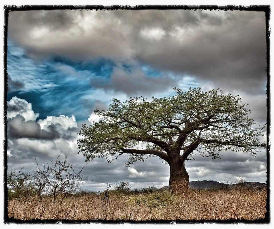 Photograph Baobab by Fabio V. Colacino on 500px