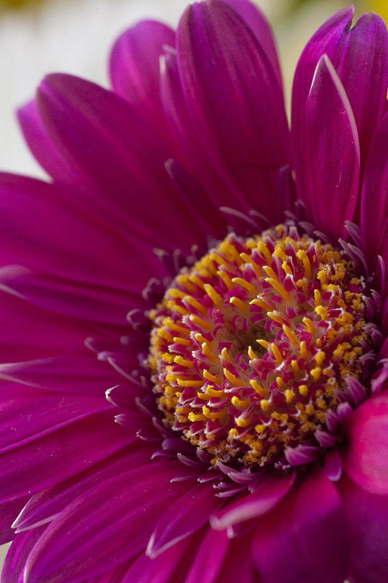 Photograph flowers macro by Dean Bedding on 500px