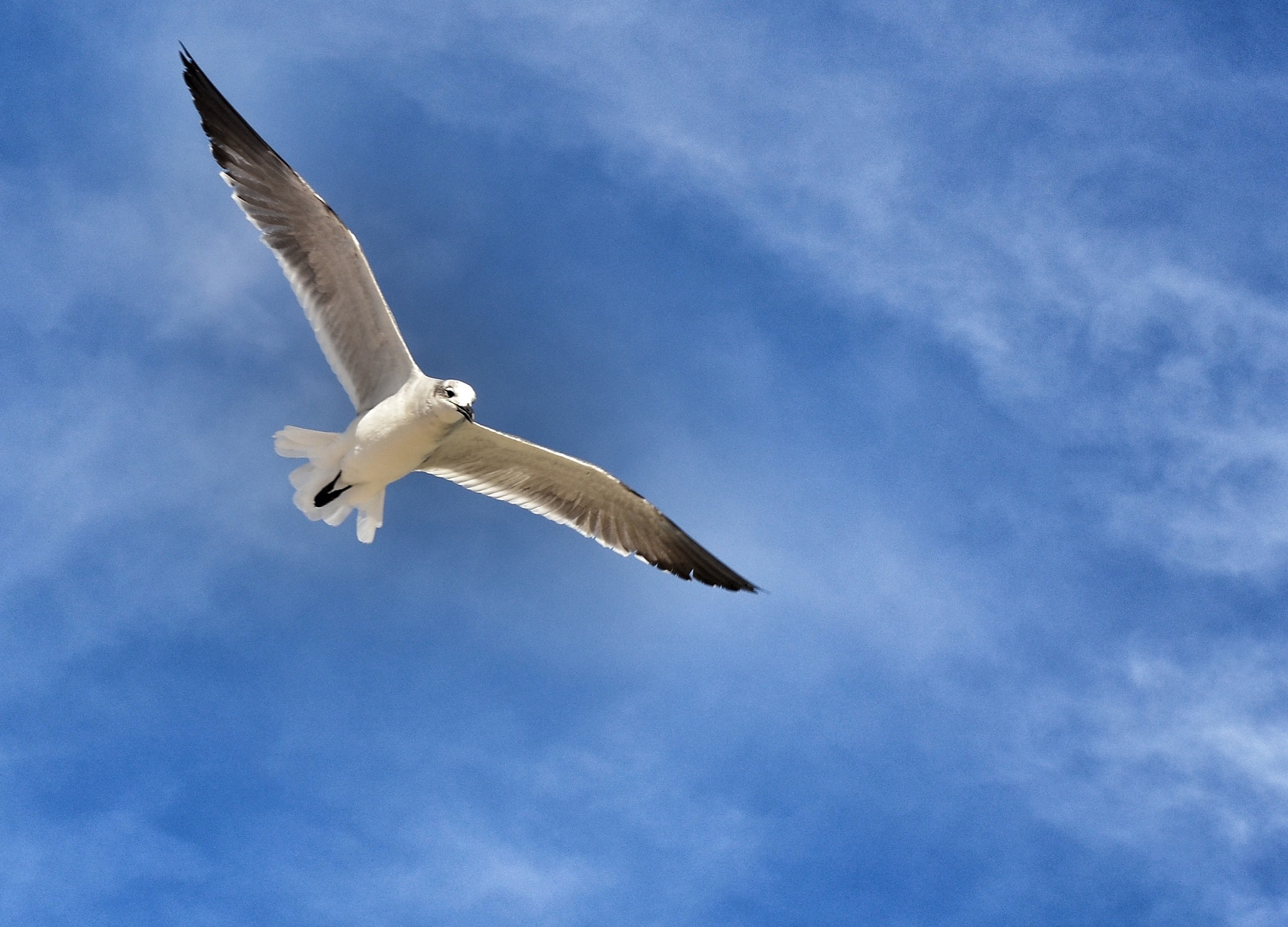 Photograph In Flight by Jeff Clow on 500px