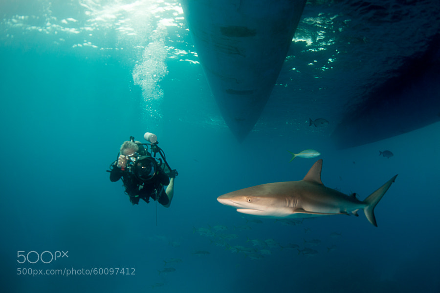 Photograph Brian with Shark, Danger Reef by Brian Laferte on 500px