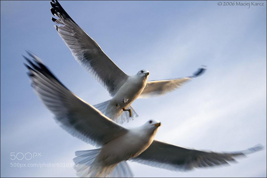 Photograph Fly With Me by Maciej Karcz on 500px