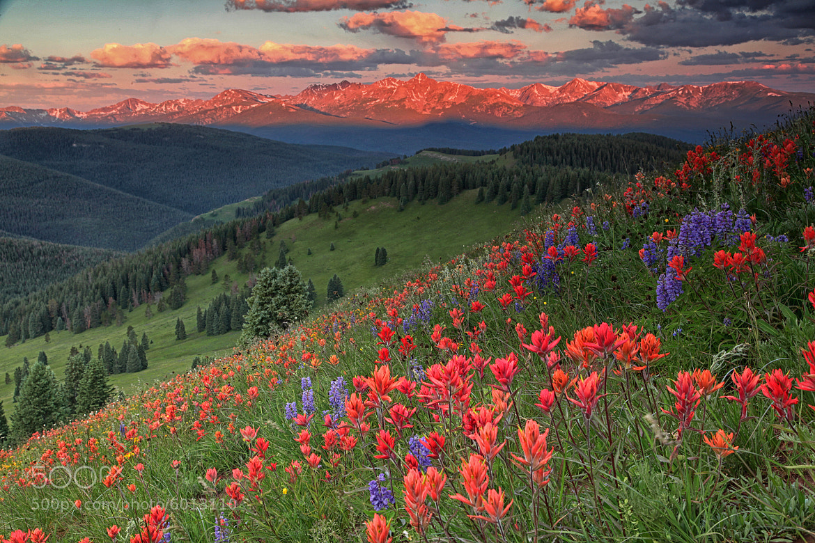 Photograph Shrine Ridge Wildflowers by Rob Younger on 500px