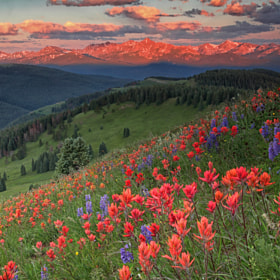 Shrine Ridge Wildflowers by Rob Younger (RobYounger)) on 500px.com
