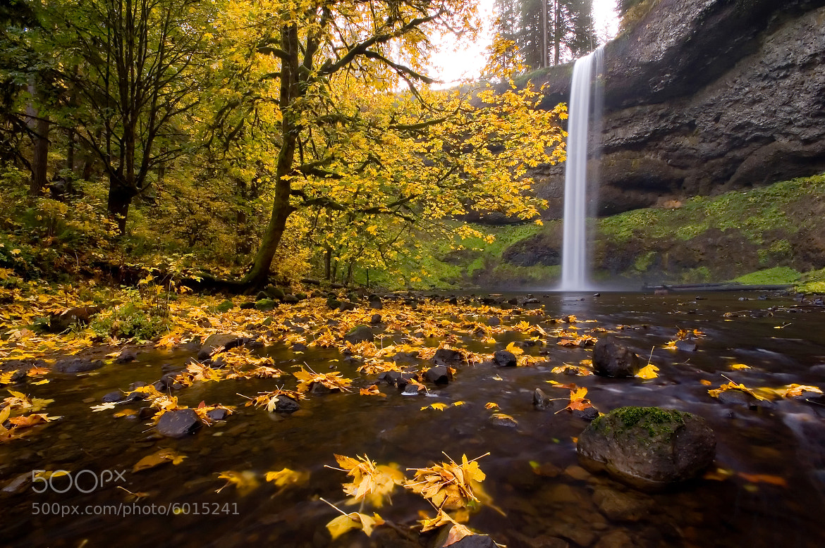 Photograph South Falls and the Maple Tree by Dan Sherman on 500px