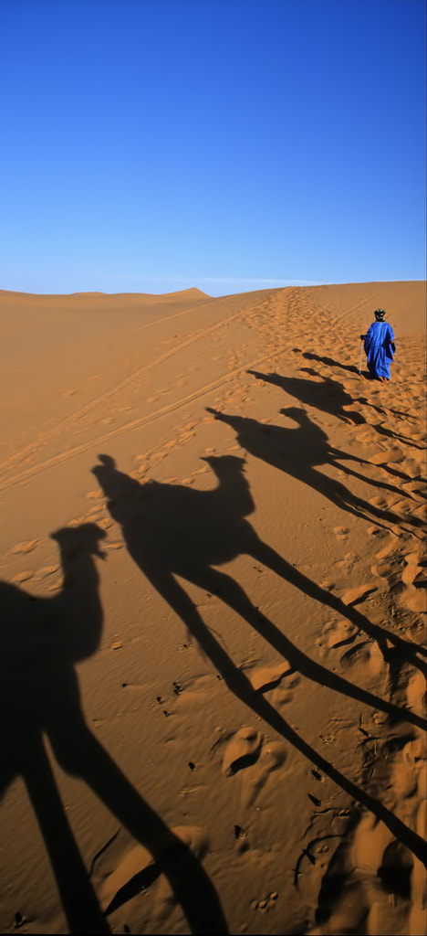 Photograph Tuareg Camel Shadow by Eamon Gallagher on 500px