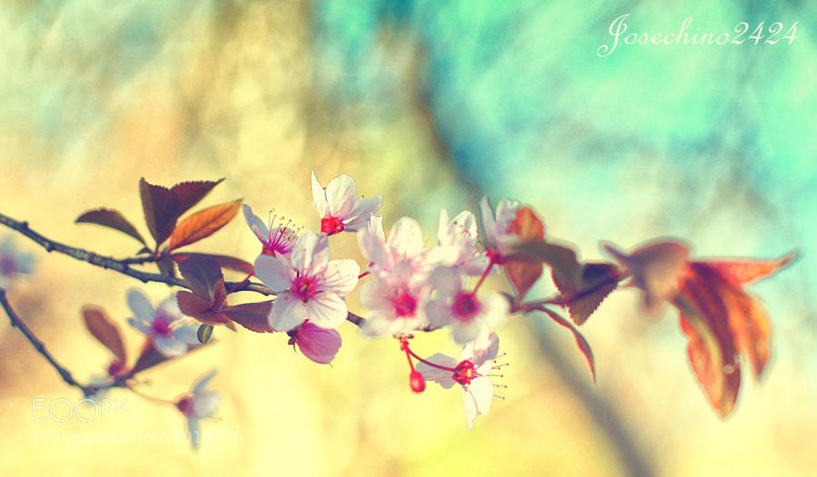 Primavera ♥♥ by Jose Maria Ramos Montero (Josechino2424) on 500px.com