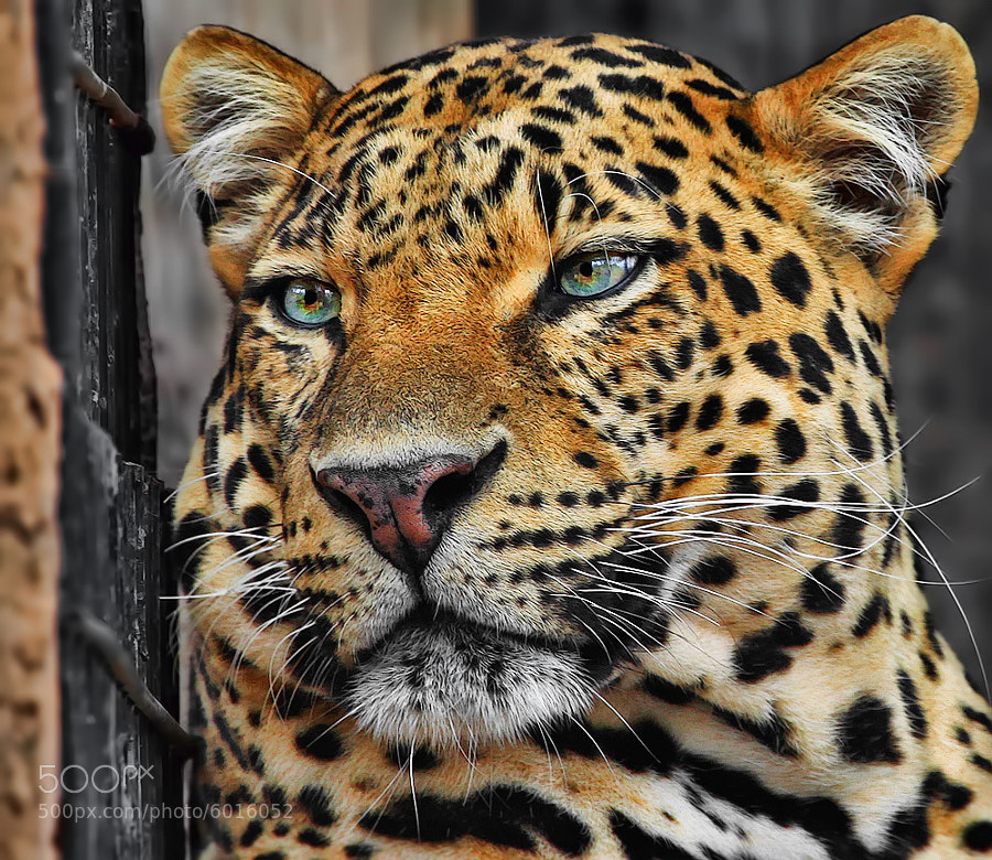 Photograph There is sadness in your eyes by Klaus Wiese on 500px