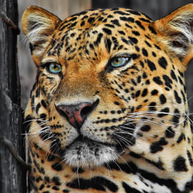 There is sadness in your eyes by Klaus Wiese (Wiese)) on 500px.com