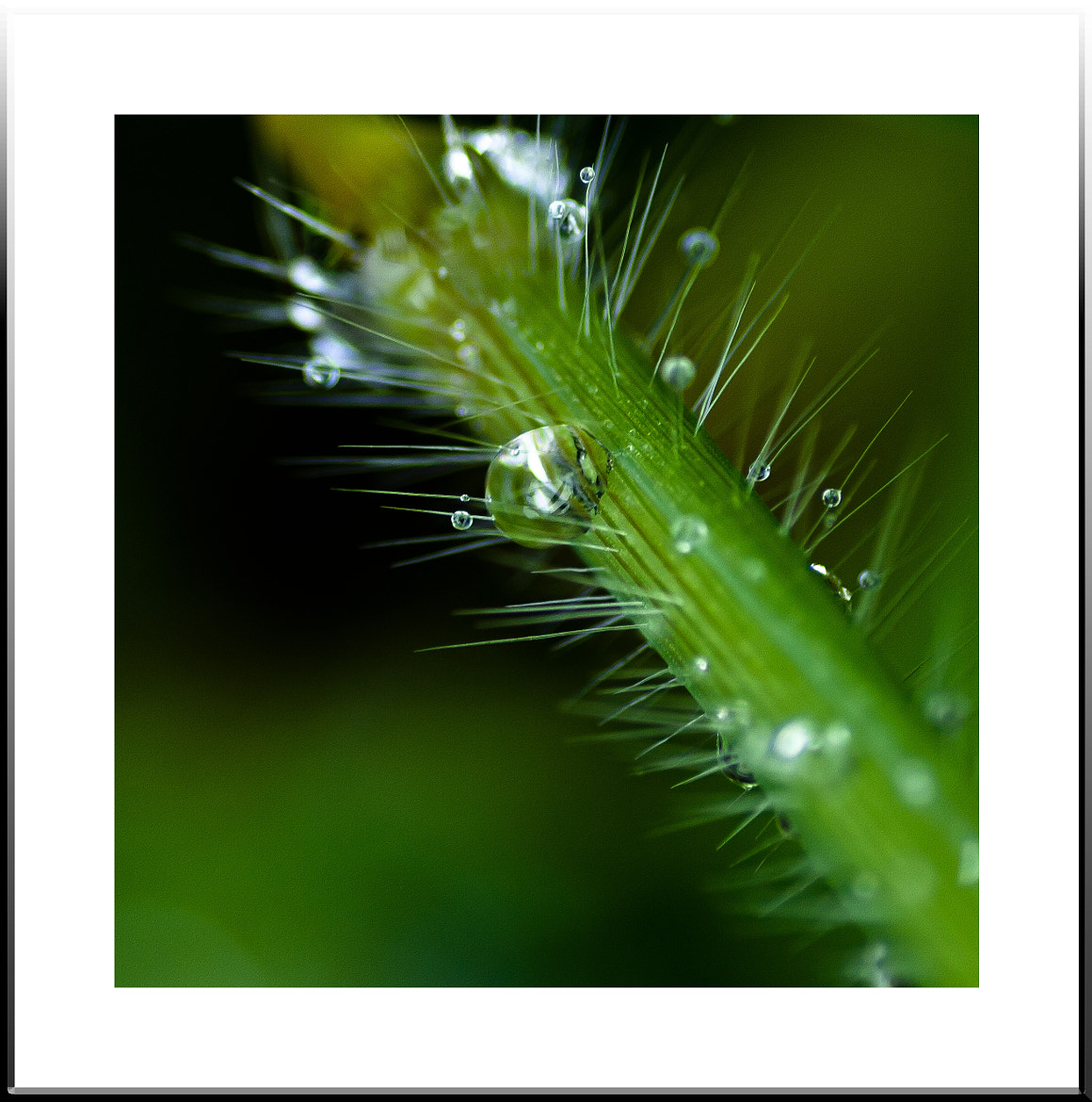 Photograph Dew on grass by Rajdev S on 500px