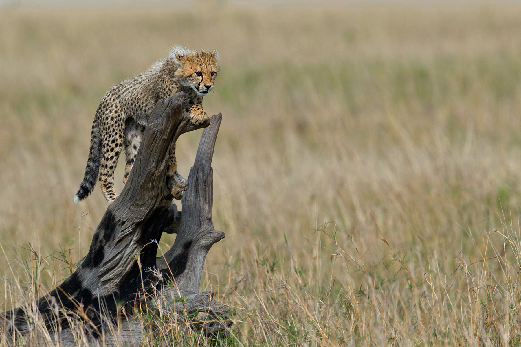 Photograph I'm king of the world! by Marc MOL on 500px