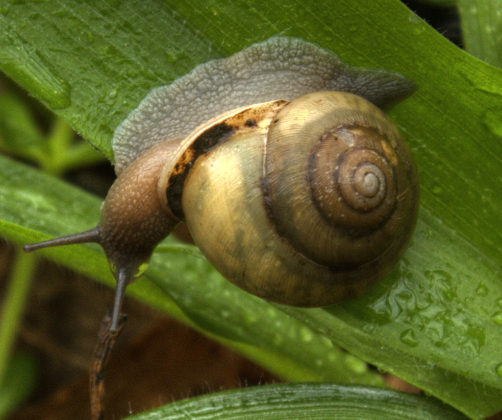 Photograph Snail's Pace by Mark T on 500px
