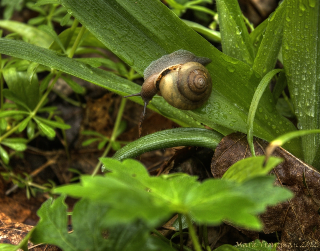 Photograph Snail's Pace II by Mark T on 500px