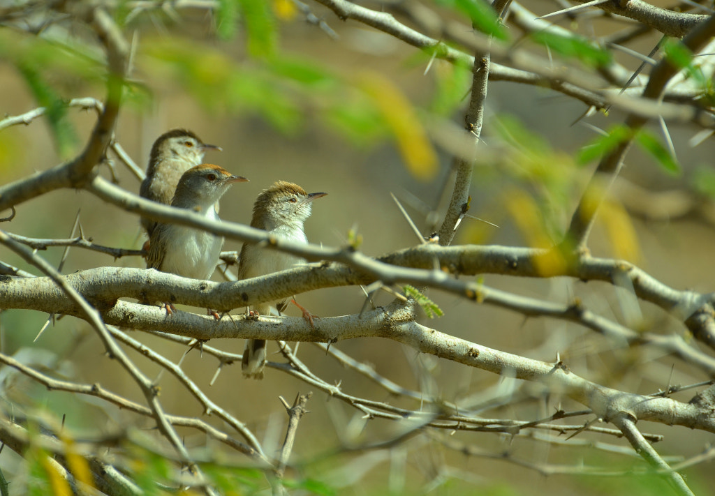 Photograph Tailor Family by anuj raina on 500px