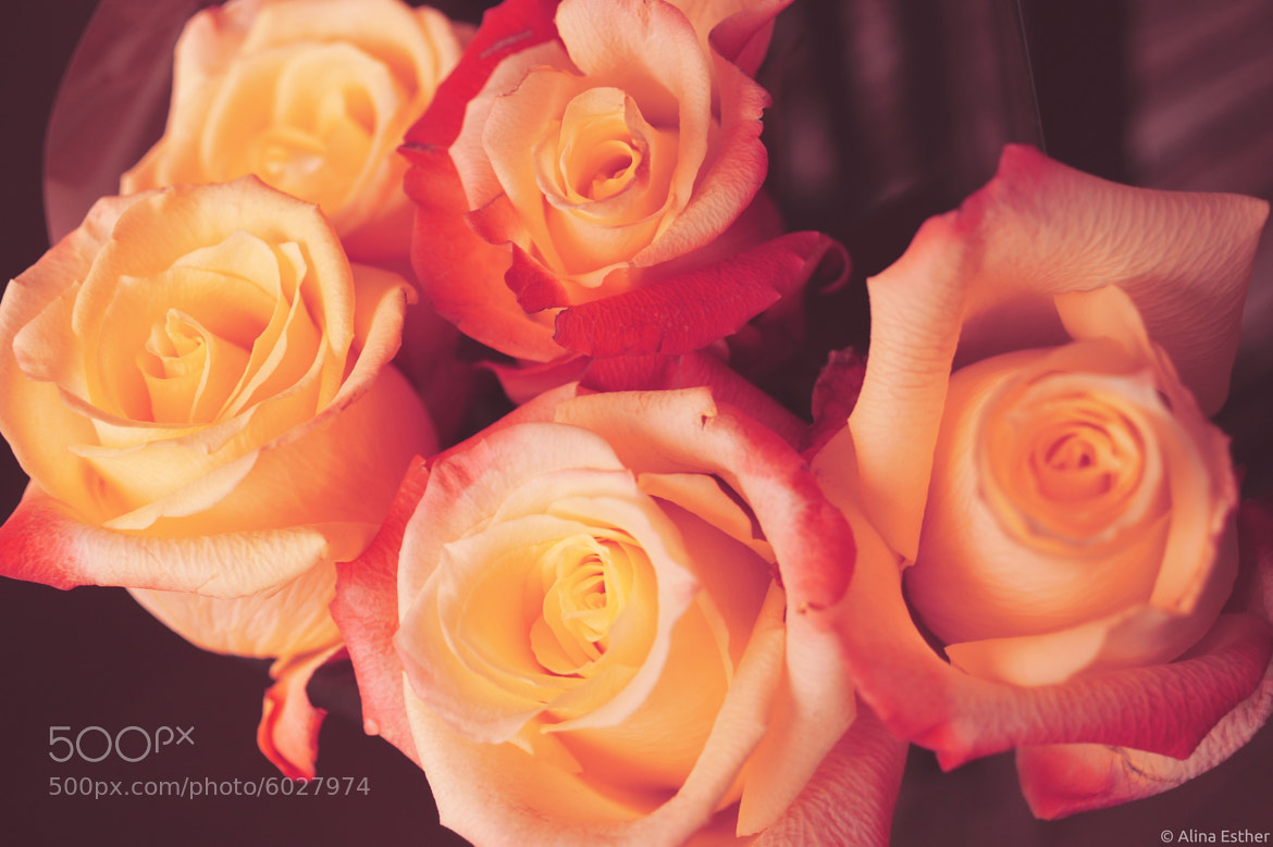 Photograph roses by Alina Esther on 500px