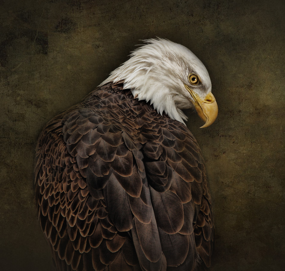 Photograph Eagle Profile by Pat Abbott on 500px