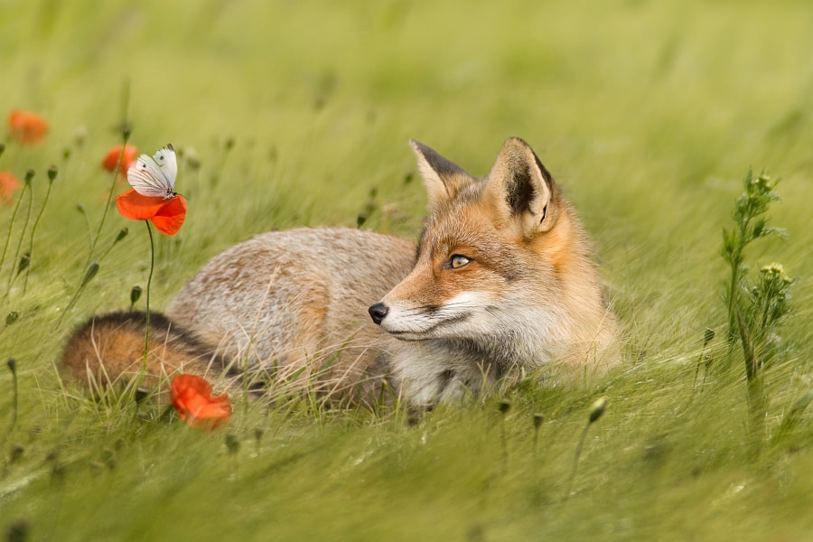 Photograph Springtime by Jeannette  Oerlemans on 500px
