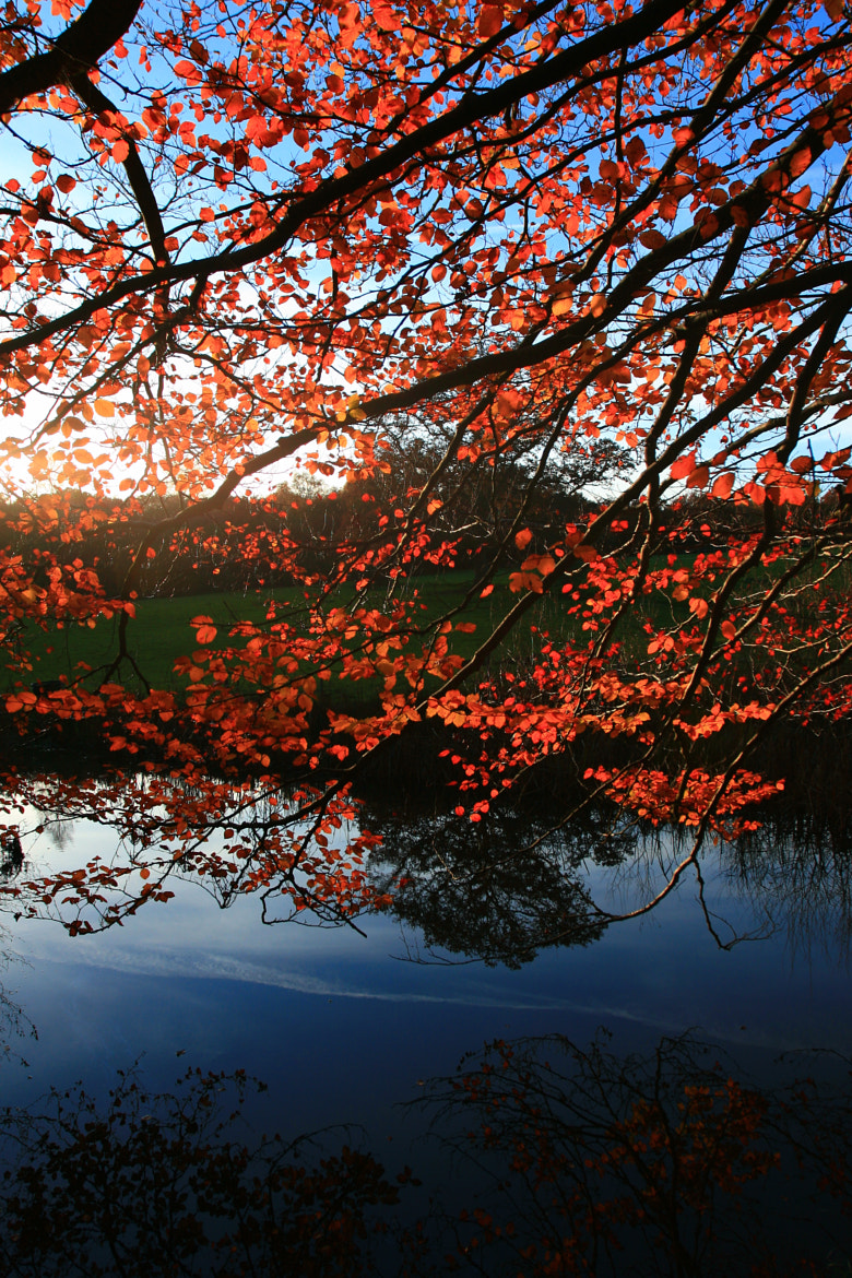 Photograph A Mirrored Autumn by Edd Rogers -  EdditPhotographics.co.uk on 500px
