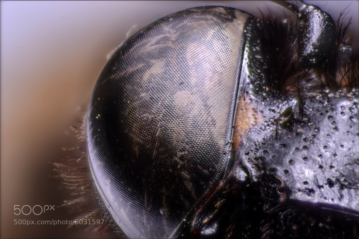 Photograph The Eye of the Bee-Holder by Yuri Ivačković on 500px