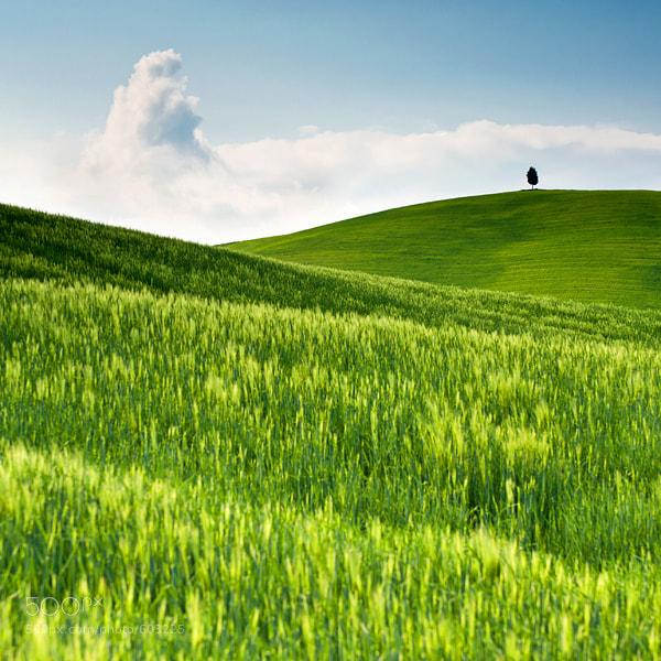 Photograph Tuscany by Tomáš Morkes on 500px