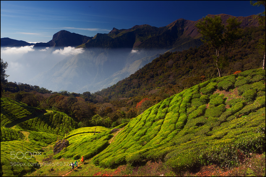 Photograph Munnar Hills by Maxim Kiryushin on 500px