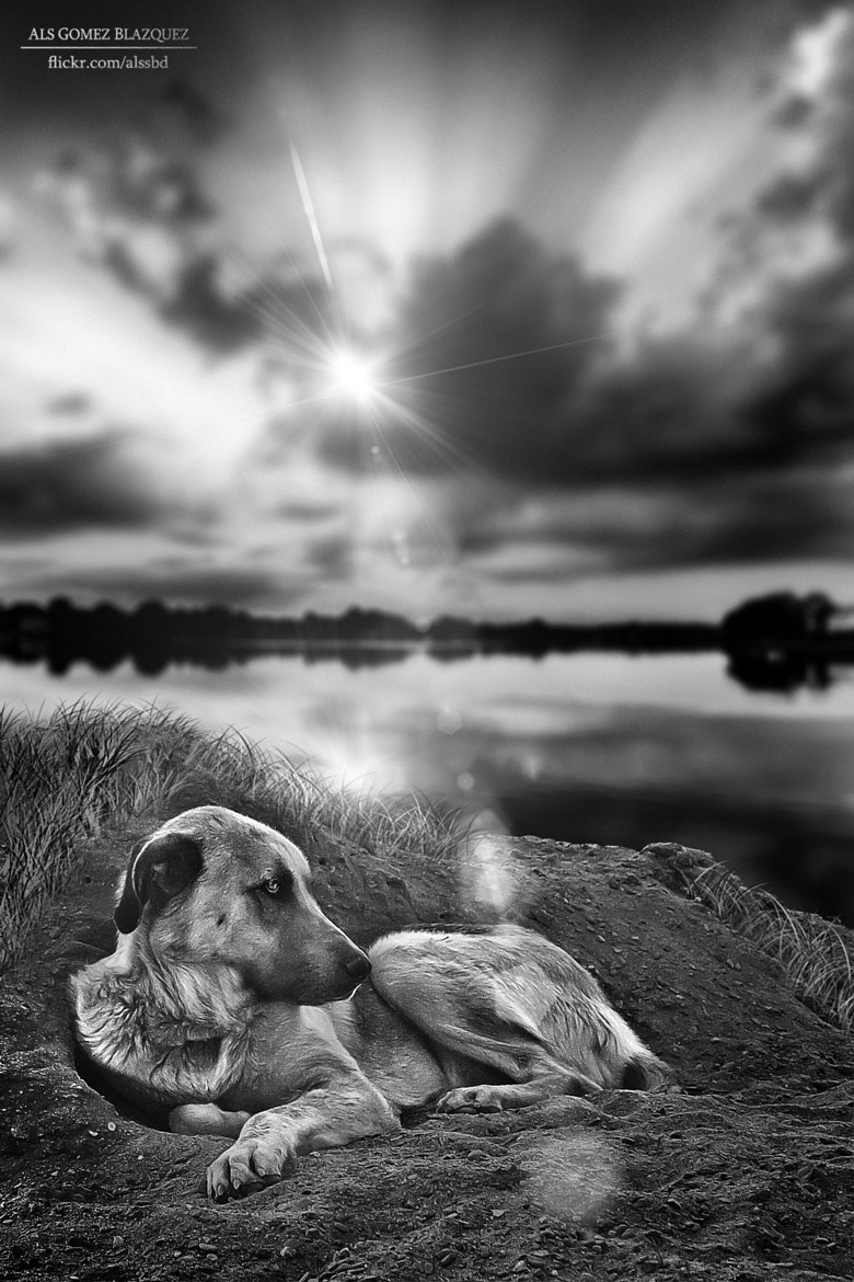 Photograph Doggy by Als Gomez Blazquez on 500px