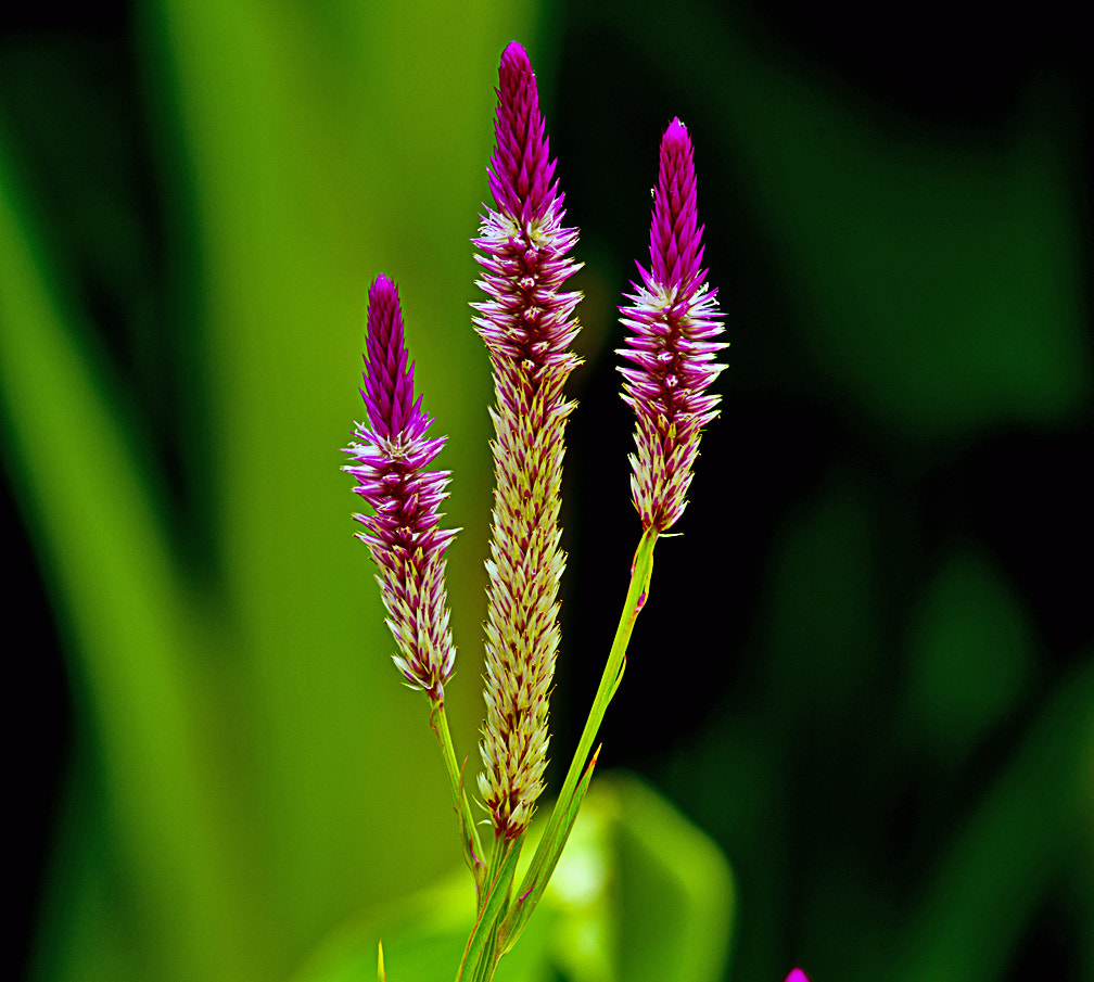 Photograph Showy Trio by Bill Weaver on 500px