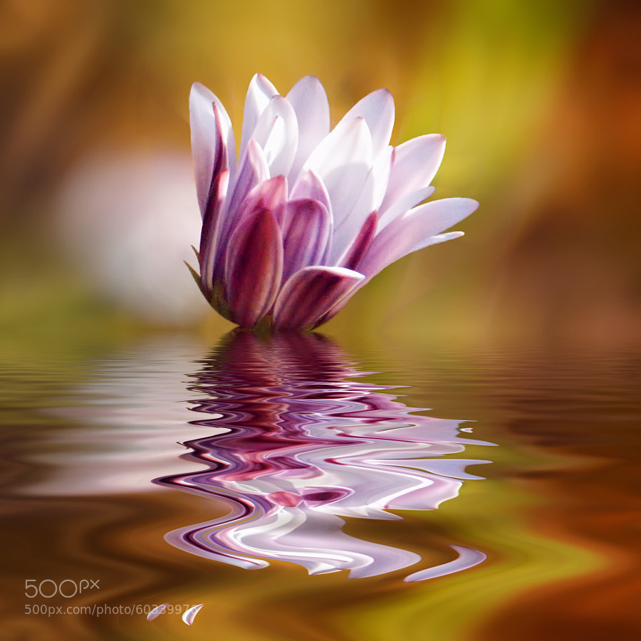 If the flower of the mind is damaged, lost its perfume, its freshness and color. The mind is even more fragile than the delicate flower.