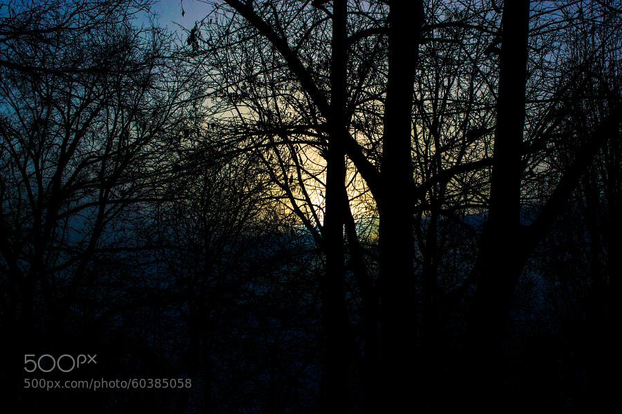 dark trees by Robert Iagar on 500px.com