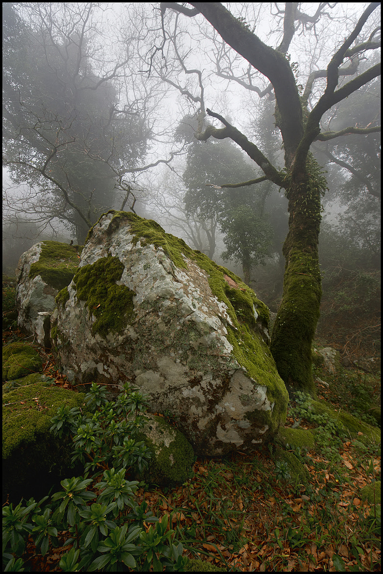 Photograph Piedra y niebla by César Comino García on 500px
